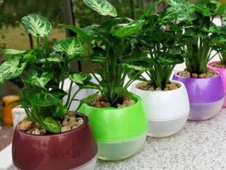 Mkono-3-5pcs-Self-Watering-Pot-Automatic-Planter-Plant-Flower-Pots-for-Garden-Office-Home-Decoration.jpg_640x640_e7bf7e21-02a2-44c6-b032-1c66dbe7c316_345x